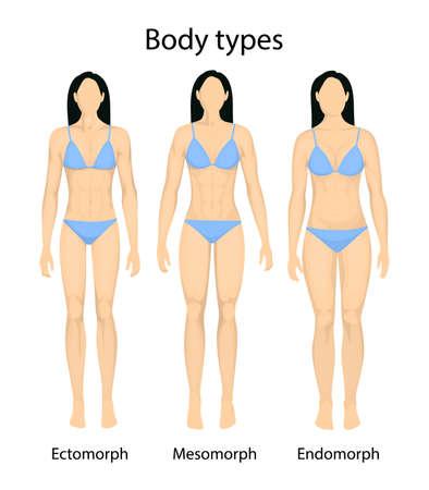 Female body types. Illustration