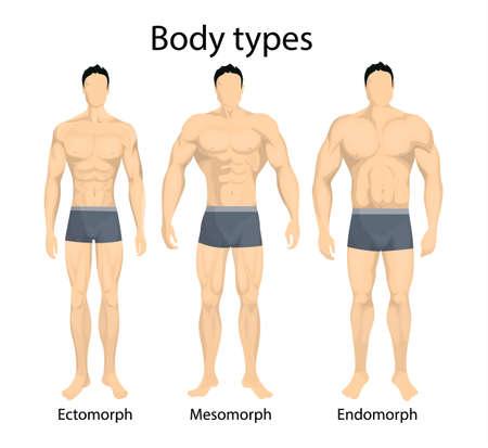 男性の体のタイプ。  イラスト・ベクター素材