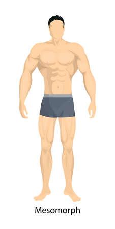 Male body types. Mesomorph body type of man.
