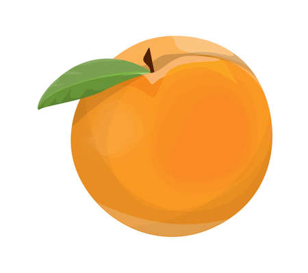 wite: Isolated sweet orange peach on wite background. Illustration