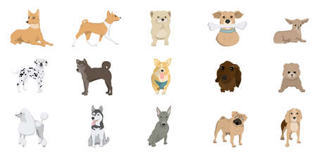 dalmatian: Dogs breed set. Poodle and bulldog, dalmatian and terrier and more.