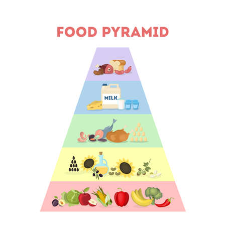 Food pyramid illustration. All types of food to eat.