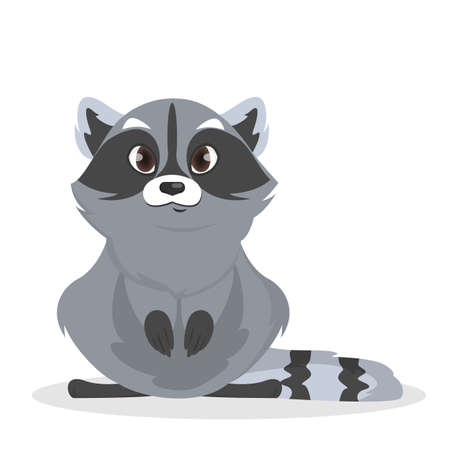 Isolated cute baby raccoon on white background.