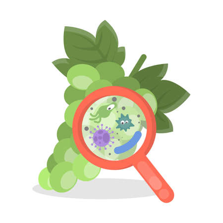 Grapes with germs. Illustration