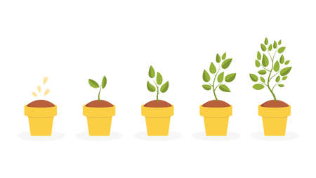 Plant life cycle concept Vector illustration. Vectores