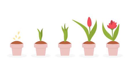 Plant life cycle. Illustration