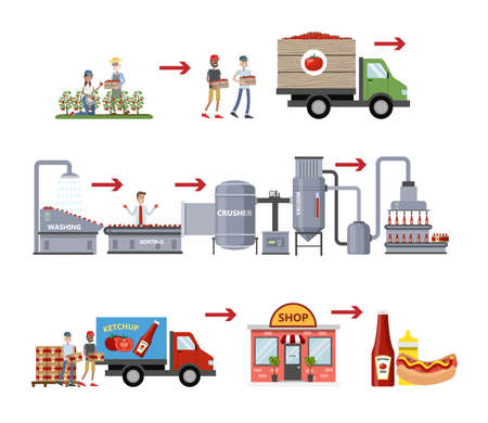 Ketchup manufacture process. Tomato sauce industry. Growing tomatoes, sorting, sending vegetables to factory, packaging bottles with ketchup and distribution. Isolated vector flat illustration