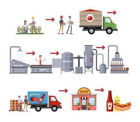 Processo di fabbricazione del ketchup. Industria della salsa di pomodoro. Coltivazione di pomodori, smistamento, invio di verdure alla fabbrica, confezionamento di bottiglie con ketchup e distribuzione. Illustrazione piana di vettore isolato
