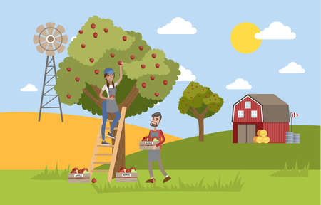 Young happy female farmer standing on the ladder and picking red apples from a huge apple tree. Male farmer collecting apples in a box. Summer in the countryside. Vector flat illustration