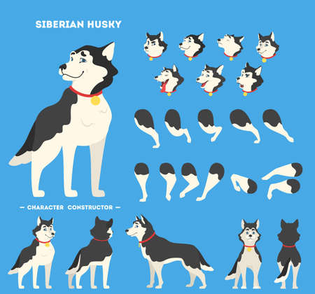 Cute siberian husky dog character animation set with various views, face emotions and poses. Vector illustration in cartoon style