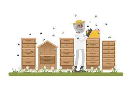 Old male beekepeer standing in the apiary and collecting honey on the farm. Natural organic product. Isolated vector flat illustration