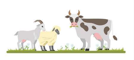 Farm animals graze on the field. Cute goat, sheep and cow chewing grass. Isolated vector flat illustration Иллюстрация
