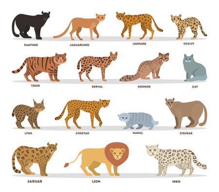 Wild and dometic cats set. Collection of cat family Illustration