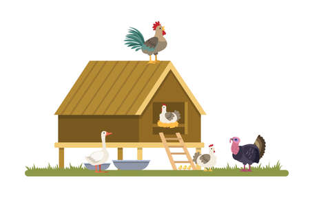 Domestic birds on the farm. Duck, hen and turkey on the village. Summer landscape. Vector flat illustration
