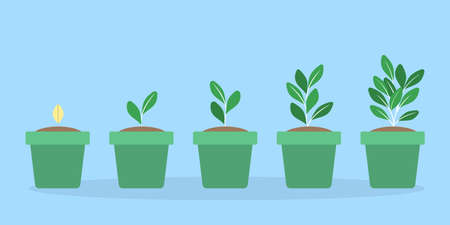 Stages of green plant growth in the pot. From seed to big sprout. Isolated flat vector illustration