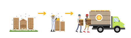 Honey production process. Old man gathering from hive and packaging product in box. Isolated vector flat illustration