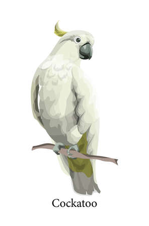 Cockatoo parrot wild exotic bird in realistic style. Tropical fauna concept. Isolated vector illustration