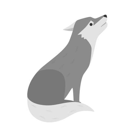Wolf wild animal from the forest. Dangerous creature. Isolated flat vector illustration Illustration