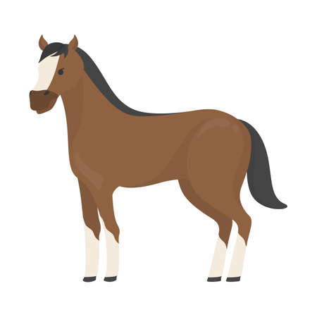 Horse wild or domestic animal. Brown mammal from the farm. Isolated flat vector illustration 向量圖像