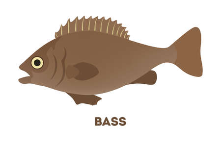 Bass fish from the lake or river. Creature with large mouth in wildlife. Idea of fishing. Flat vector illustration