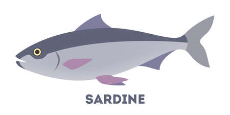 Sardine fish from the ocean or sea. Idea of fishing and seafood. Marine industry. Flat vector illustration
