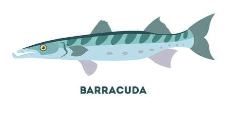 Barracuda marine creature. Fish from the ocean Illustration