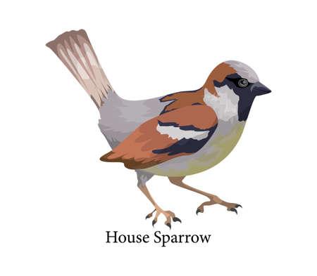Pájaro gorrión en la naturaleza. Animal salvaje con pluma. Ilustración de vector plano aislado