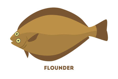 Flounder fish from the sea or ocean.