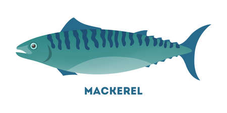 Mackerel fish from the ocean or sea. Aquatic life and fauna in the water. Fresh food from sea. Flat vector illustration
