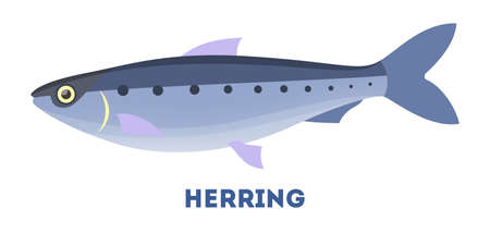 Herring fish from the ocean or sea. Marine creature and water wildlife. Flat vector illustration Illustration