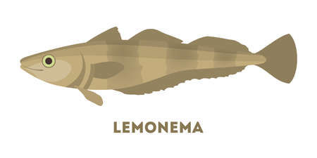 Laemonema fish from the ocean or sea. Marine creature and water wildlife. Flat vector illustration