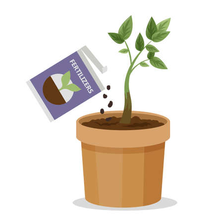 Growing plant in the pot using plant fertilizer. Agriculture and gardening. Sprout in the soil.
