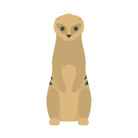Funny cute meerkat. Wild desert animal from africa. Creature standing. Isolated flat vector illustration