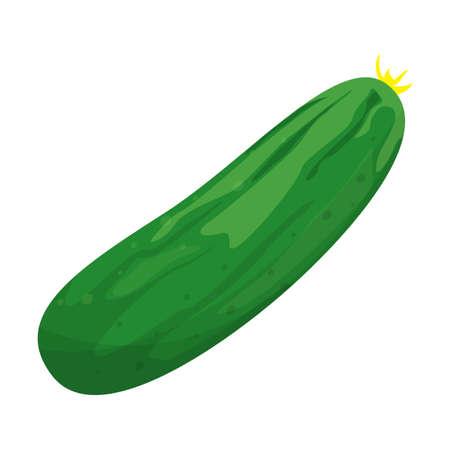 Fresh green cucumber for salad. Tasty healthy vegetable. Ingredient for cooking at home. Natural organic nutrition. Vector flat illustration Vektoros illusztráció
