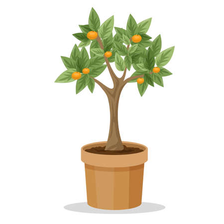 Big tree plant with fruit in the pot. Idea of gardening and botany. Plant with green leaf and branch. Isolated vector illustration in cartoon style Illustration