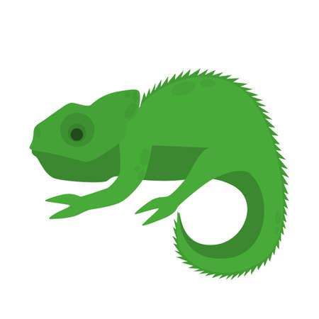 Green chameleon animal. A jungle exotic creature