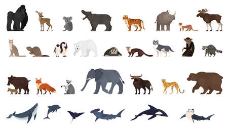 Animal set. Collection of exotic and wild animals