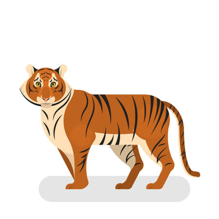 Tiger wild animal from the safari nature Illusztráció