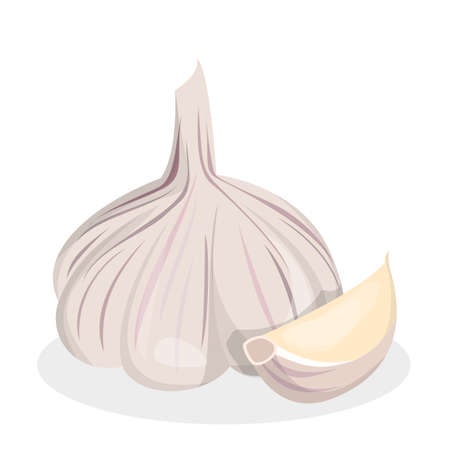 Garlic ingredient for cooking. Fresh healthy and natural