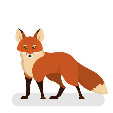 Fox animal with red fur. Creature from wildlife