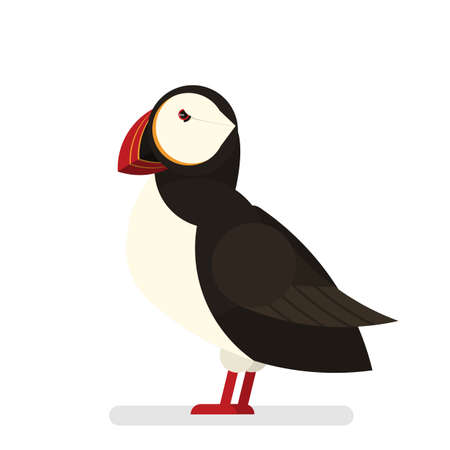 Puffin bird. Animal with black and white fur Banque d'images - 118929259