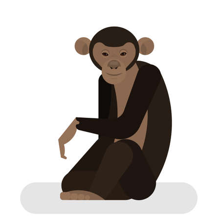 Chimpanzee from the jungle. African monkey character. Wild primate sitting. Isolated vector illustration in cartoon style