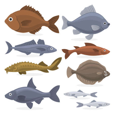 Fish set. Collection of aquatic fauna. Sturgeon and carp, pike and tuna. Underwater creature. Vector illustration in cartoon style