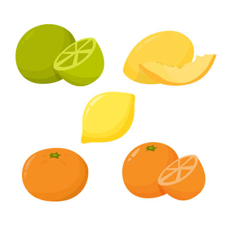 Citrus fruit set. Orange and lime. Fresh juicy food. Organic ripe tropical meal. Isolated vector illustration in cartoon style