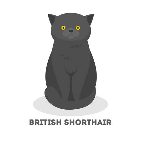 British short hair cat. Cute funny pet with a gray fur. Kitty with yellow eyes. Isolated vector illustration in cartoon style