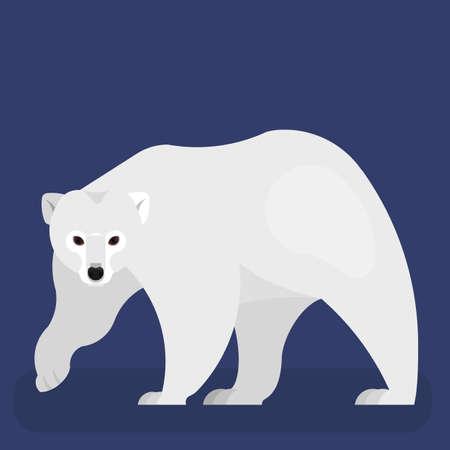 Polar bear. Big wild predator with a white fur Illustration