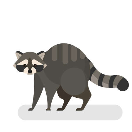 Raccoon animal. Wild creature with a black and grey fur Illustration