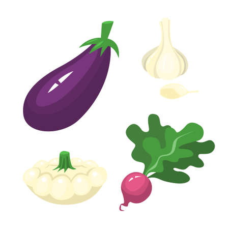 Set of vegetables. Fresh organic food. Eggplant, radish and garlic. Vegetarian meal. Isolated vector illustration in cartoon style