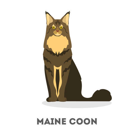 Maine coon cat. Cute furry animal. Domestic pet with the gray and brown fur. Isolated vector illustration in cartoon style