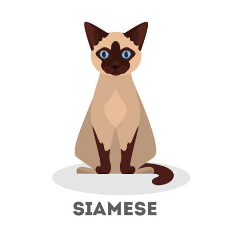 Siamese cat. Beautiful animal breed. Adorable domestic animal with fluffy fur. Isolated vector illustration in cartoon style Ilustrace